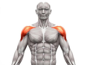 Rhomboids for muscle workout